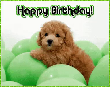 Birthday Poodle GIFs