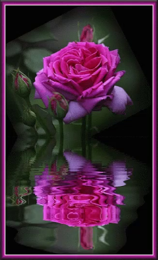 Animated pink rose gifs tenor pink rose gif pink rose reflection gifs mightylinksfo
