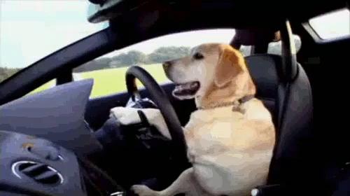 Dog Driving Car Gifs Tenor